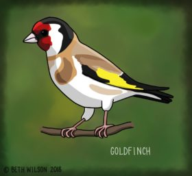drawing of a goldfinch
